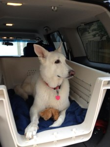 Expat Dog